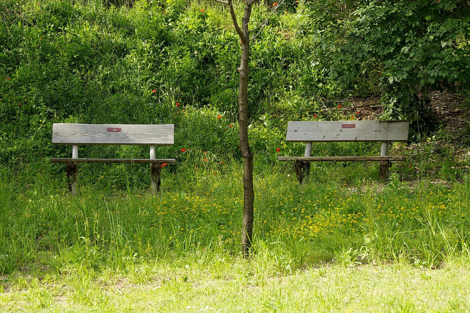 Panchine al Bosco di San Francesco, Assisi (PG)